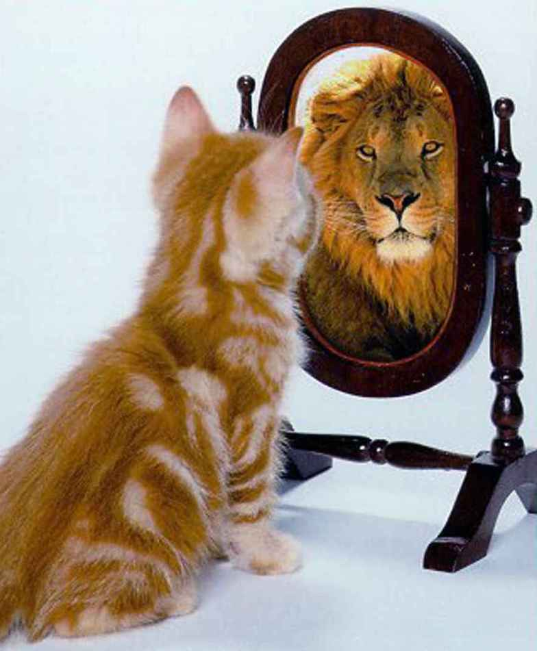 lion-in-mirror2